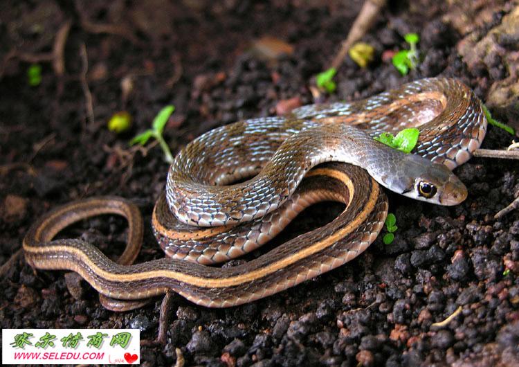 突然看到蛇,让人情绪紧张